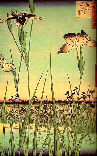 estampe iris